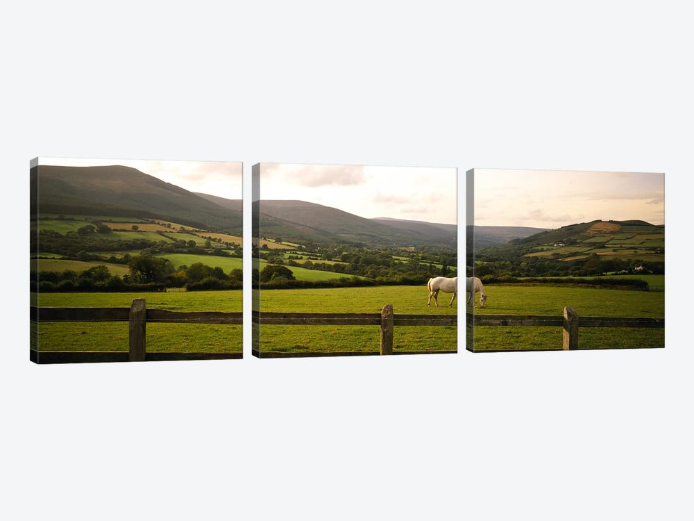 Lone Horse At Pasture, Enniskerry, County Wicklow, Leinster Province, Republic Of Ireland by Panoramic Images 3-piece Art Print