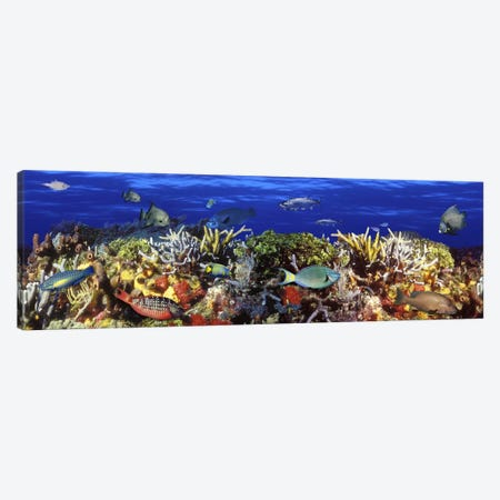 School of fish swimming near a reef Canvas Print #PIM5750} by Panoramic Images Canvas Art