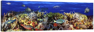 School of fish swimming near a reef Canvas Art Print