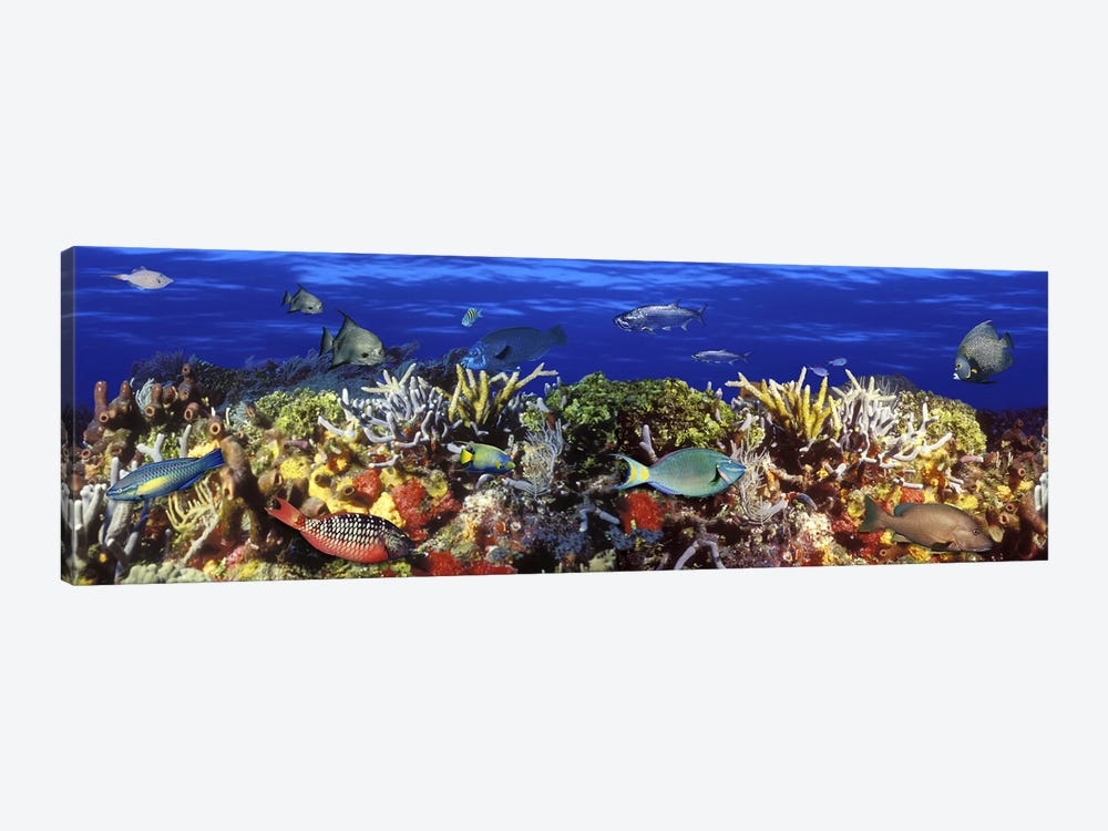 School of fish swimming near a reef by Panoramic Images 1-piece Canvas Artwork