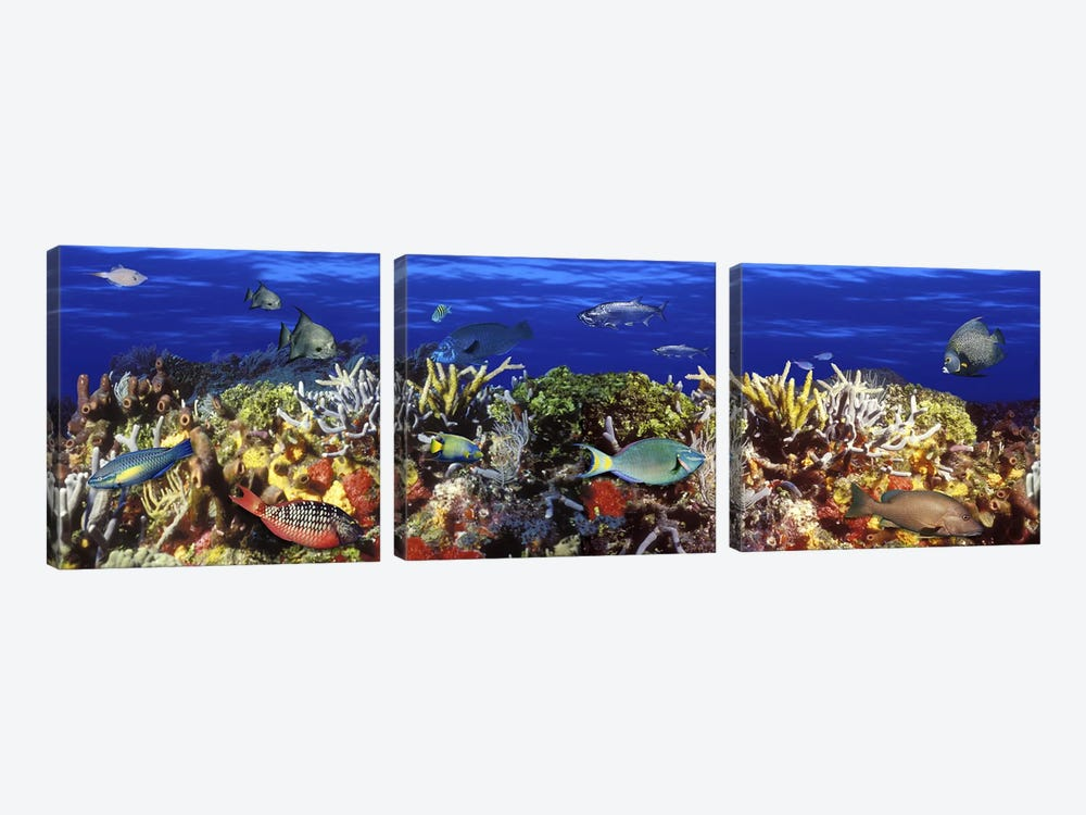 School of fish swimming near a reef by Panoramic Images 3-piece Canvas Artwork