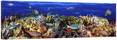 School of fish swimming near a reef Canvas Art Print