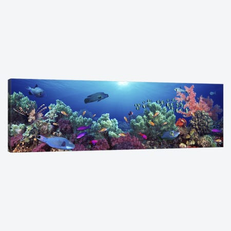 School of fish swimming near a reef, Indo-Pacific Ocean Canvas Print #PIM5751} by Panoramic Images Canvas Wall Art