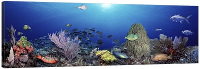 School of fish swimming in the sea Canvas Art Print