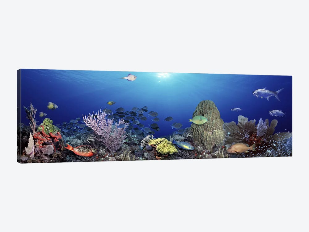 School of fish swimming in the sea by Panoramic Images 1-piece Canvas Artwork