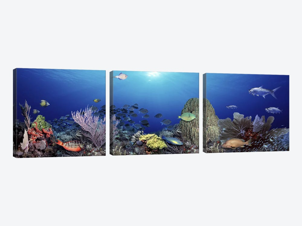 School of fish swimming in the sea by Panoramic Images 3-piece Canvas Artwork