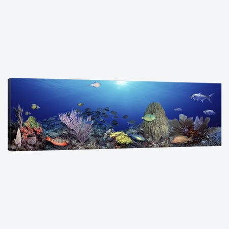School of fish swimming in the sea Canvas Print #PIM5752} by Panoramic Images Canvas Artwork