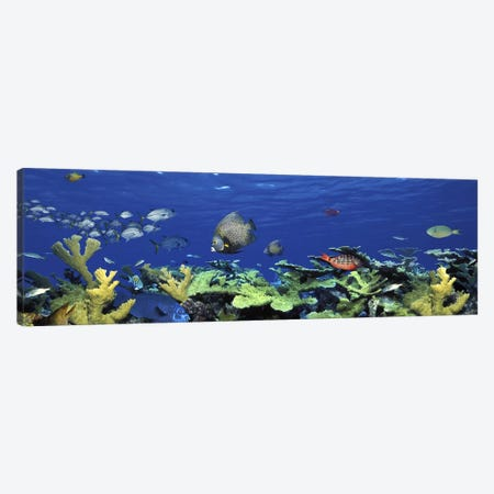 School of fish swimming in the seaDigital Composite Canvas Print #PIM5753} by Panoramic Images Canvas Artwork