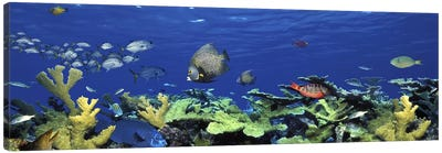 School of fish swimming in the seaDigital Composite Canvas Print #PIM5753