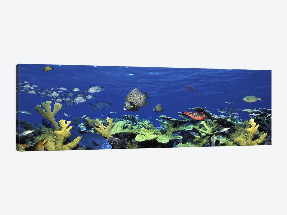 School of fish swimming in the seaDigital Composite by Panoramic Images 1-piece Canvas Print