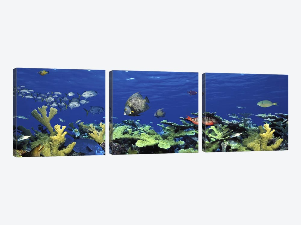 School of fish swimming in the seaDigital Composite by Panoramic Images 3-piece Canvas Art Print