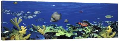 School of fish swimming in the seaDigital Composite Canvas Art Print