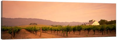 Vineyard Landscape, Napa Valley, California, USA Canvas Print #PIM577