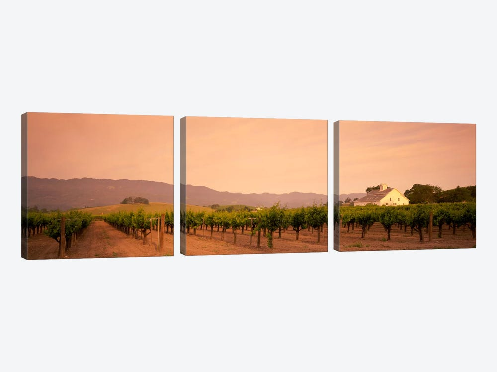 Vineyard Landscape, Napa Valley, California, USA by Panoramic Images 3-piece Canvas Artwork