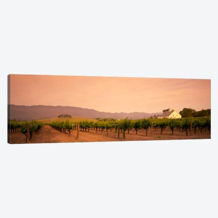 Vineyard Landscape, Napa Valley, California, USA Canvas Print #PIM577} by Panoramic Images Art Print