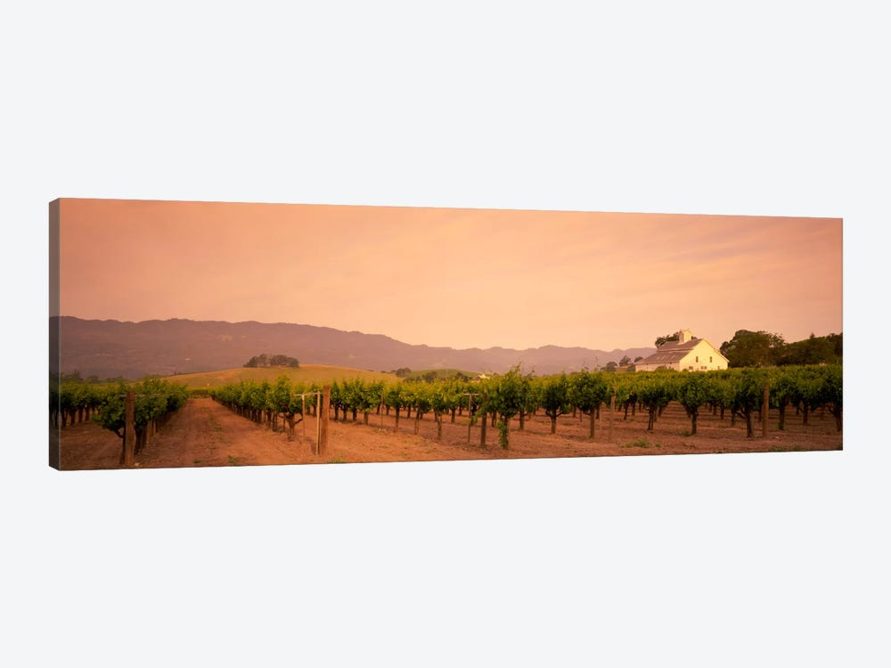 Vineyard Landscape, Napa Valley, California, USA by Panoramic Images 1-piece Canvas Artwork