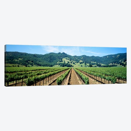 Vineyard Landscape, Mendocino County, California, USA Canvas Print #PIM578} by Panoramic Images Canvas Artwork