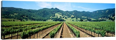 Vineyard Landscape, Mendocino County, California, USA Canvas Print #PIM578