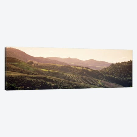 Vineyard Landscape, Sonoma, Sonoma County, California, USA Canvas Print #PIM579} by Panoramic Images Canvas Artwork