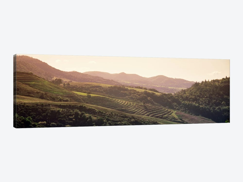 Vineyard Landscape, Sonoma, Sonoma County, California, USA by Panoramic Images 1-piece Canvas Art