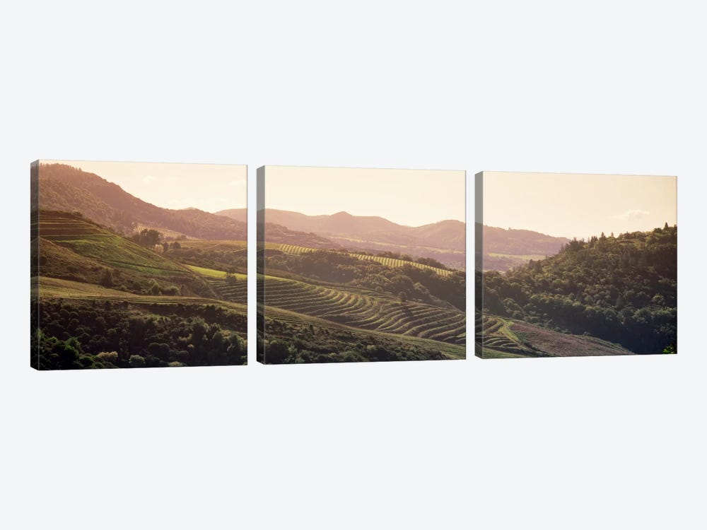 Vineyard Landscape, Sonoma, Sonoma County, California, USA by Panoramic Images 3-piece Canvas Artwork