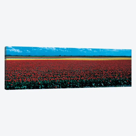 Tulip field near Spalding Lincolnshire England Canvas Print #PIM57} by Panoramic Images Canvas Wall Art