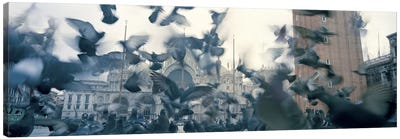 Low angle view of a flock of pigeons, St. Mark's Square, Venice, Italy Canvas Art Print