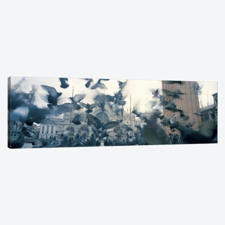 Low angle view of a flock of pigeons, St. Mark's Square, Venice, Italy Canvas Print #PIM5819} by Panoramic Images Art Print
