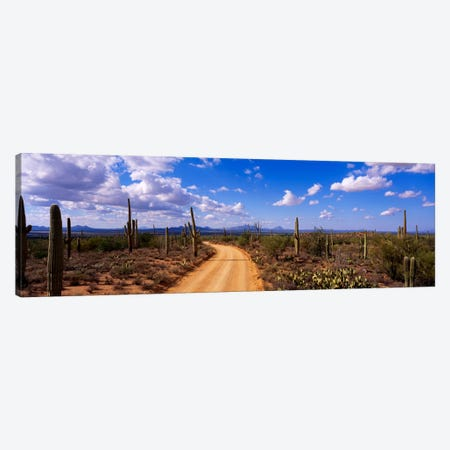 RoadSaguaro National Park, Arizona, USA Canvas Print #PIM582} by Panoramic Images Art Print