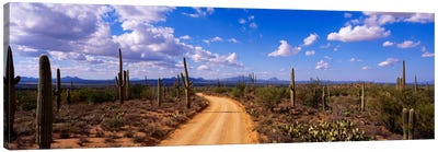 RoadSaguaro National Park, Arizona, USA Canvas Art Print