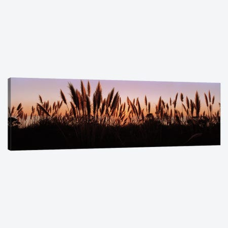 Silhouette of grass in a field at dusk, Big Sur, California, USA Canvas Print #PIM5841} by Panoramic Images Canvas Art