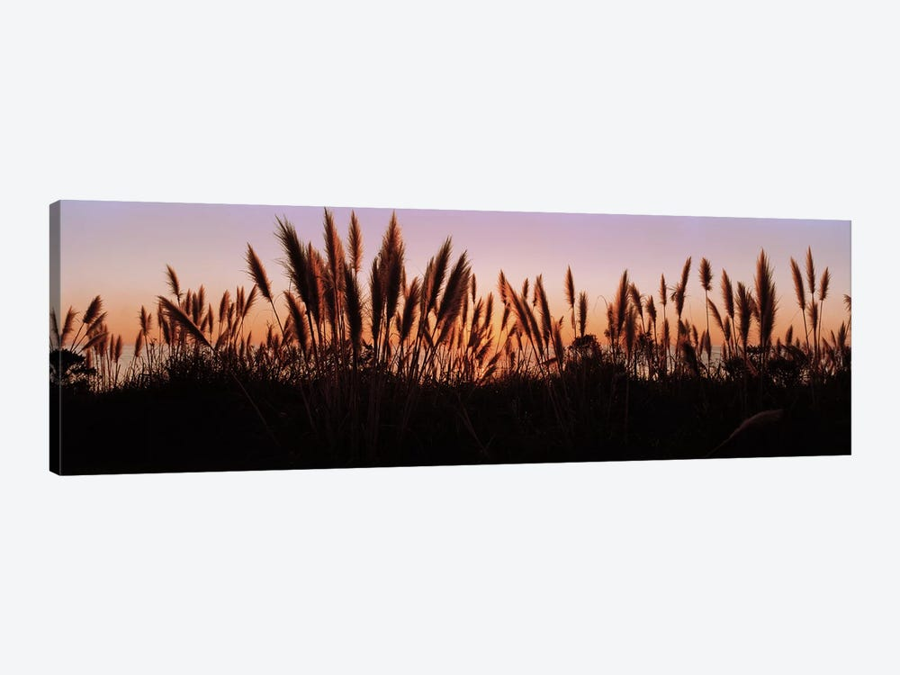 Silhouette of grass in a field at dusk, Big Sur, California, USA by Panoramic Images 1-piece Canvas Wall Art