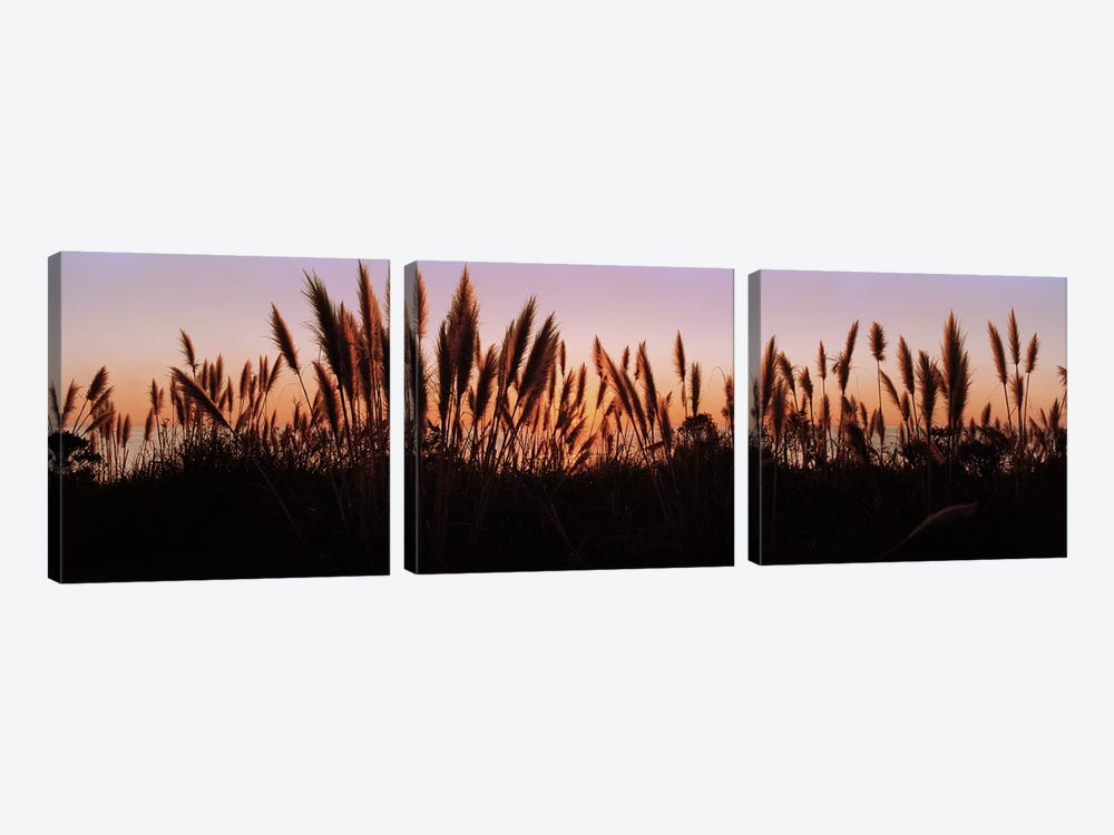 Silhouette of grass in a field at dusk, Big Sur, California, USA by Panoramic Images 3-piece Canvas Art
