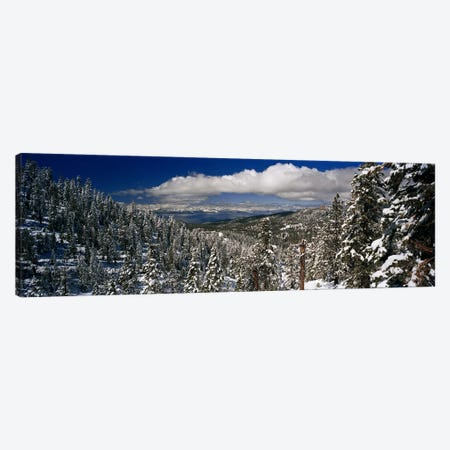 Wintry Alpine Forest Landscape, Lake Tahoe, Sierra Nevada Canvas Print #PIM5862} by Panoramic Images Canvas Wall Art