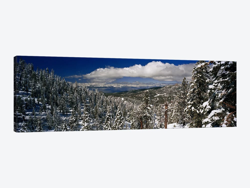 Wintry Alpine Forest Landscape, Lake Tahoe, Sierra Nevada by Panoramic Images 1-piece Canvas Print