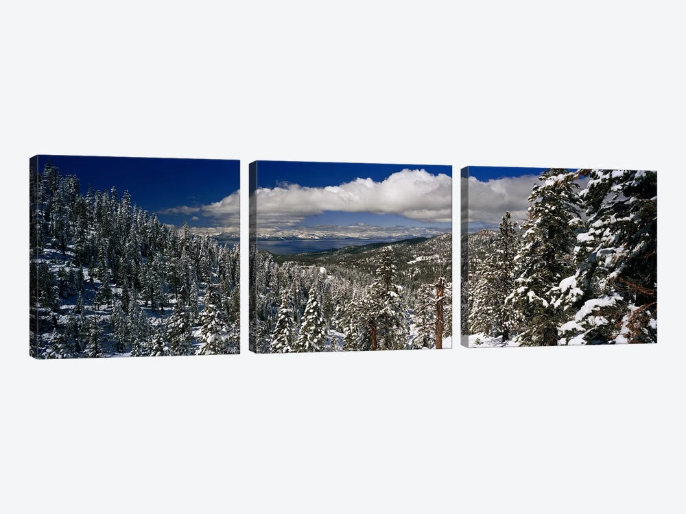 Wintry Alpine Forest Landscape, Lake Tahoe, Sierra Nevada by Panoramic Images 3-piece Art Print