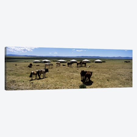 Group of horses and yurts in a field, Independent Mongolia Canvas Print #PIM5887} by Panoramic Images Canvas Art Print
