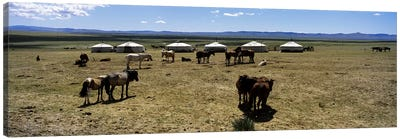 Group of horses and yurts in a field, Independent Mongolia Canvas Art Print