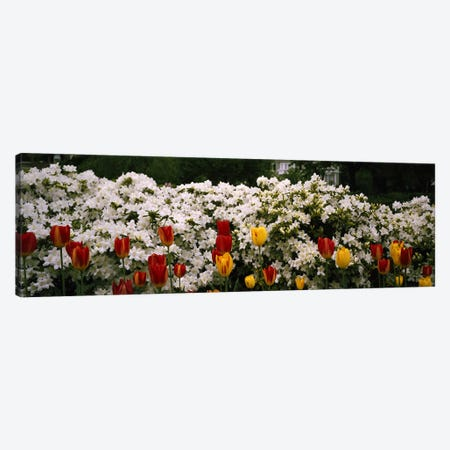 Flowers in a garden, Sherwood Gardens, Baltimore, Maryland, USA Canvas Print #PIM5901} by Panoramic Images Canvas Print