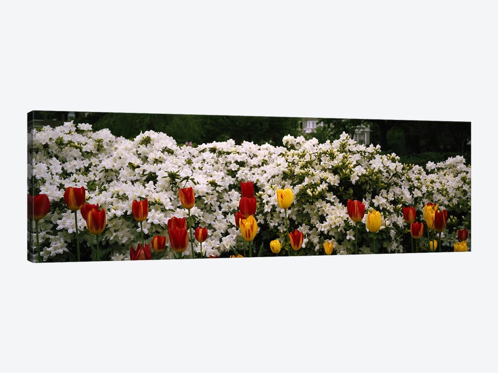 Flowers in a garden, Sherwood Gardens, Baltimore, Maryland, USA by Panoramic Images 1-piece Art Print