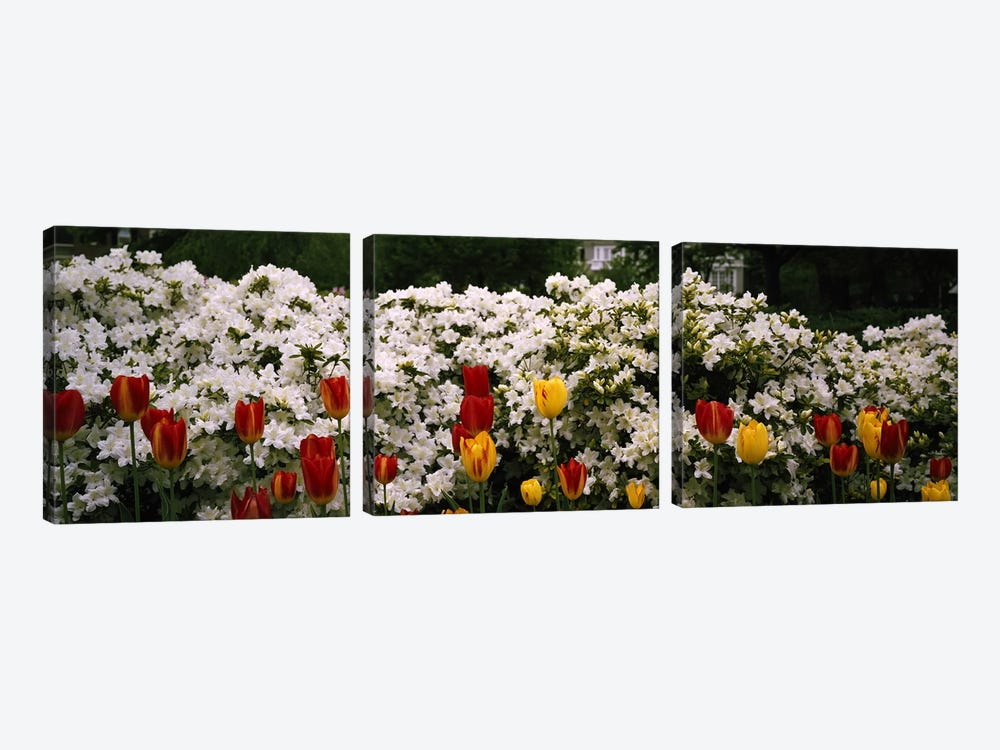 Flowers in a garden, Sherwood Gardens, Baltimore, Maryland, USA by Panoramic Images 3-piece Canvas Print
