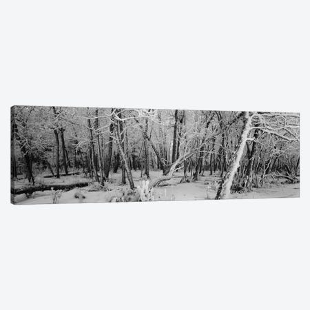 Snow covered trees in a forest, Alberta, Canada Canvas Print #PIM5947} by Panoramic Images Canvas Artwork