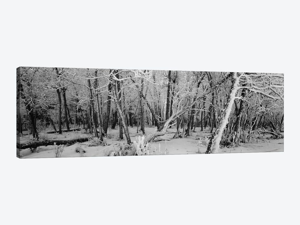 Snow covered trees in a forest, Alberta, Canada by Panoramic Images 1-piece Canvas Art Print
