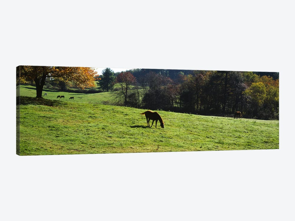 Horses grazing in a field, Kent County, Michigan, USA by Panoramic Images 1-piece Canvas Art Print