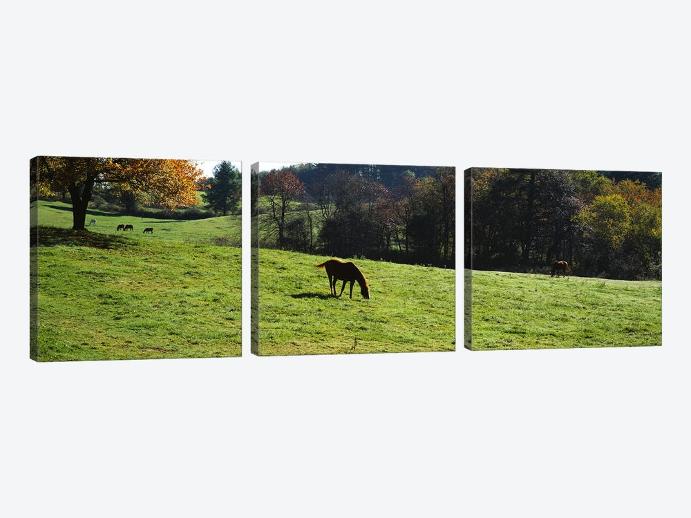 Horses grazing in a field, Kent County, Michigan, USA by Panoramic Images 3-piece Canvas Print