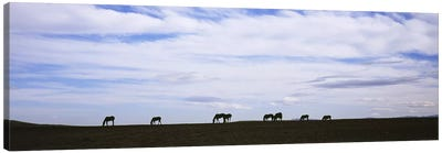 Silhouette of horses in a fieldMontana, USA Canvas Art Print
