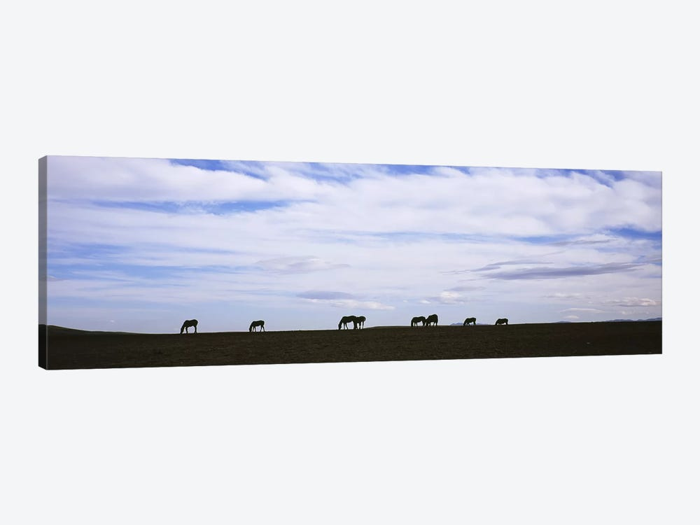 Silhouette of horses in a fieldMontana, USA by Panoramic Images 1-piece Canvas Artwork