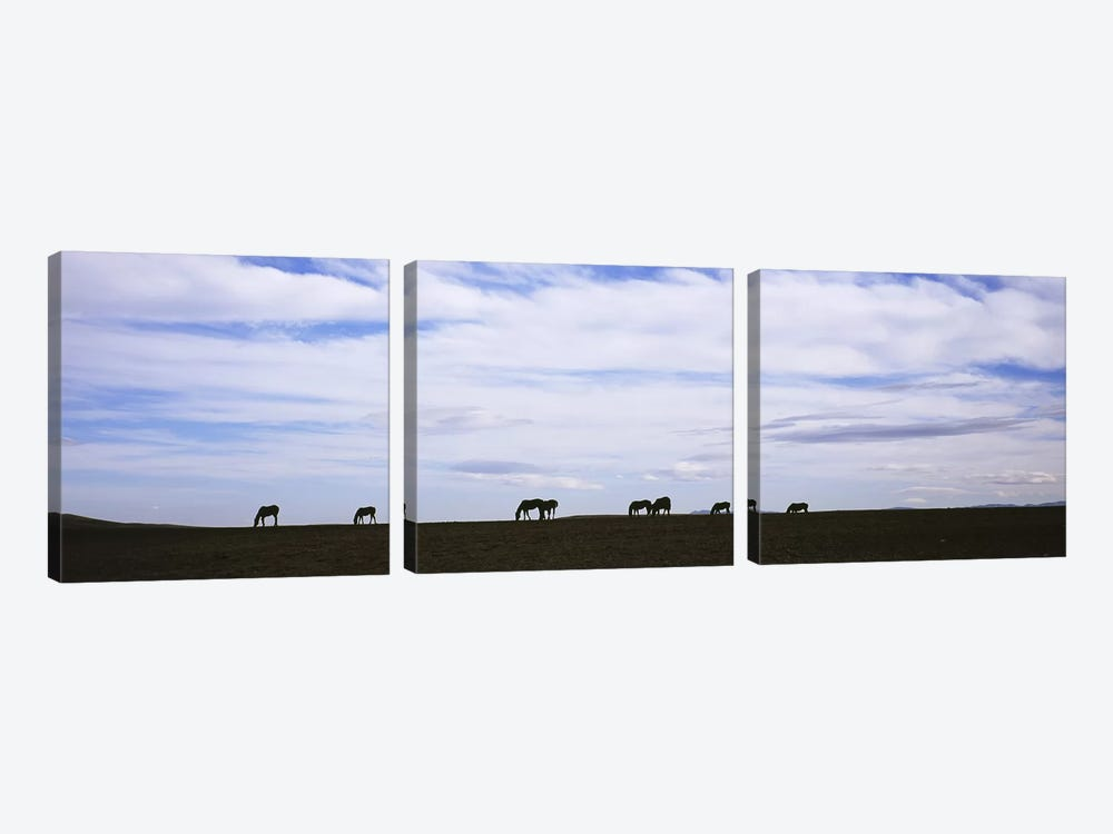 Silhouette of horses in a fieldMontana, USA by Panoramic Images 3-piece Canvas Art
