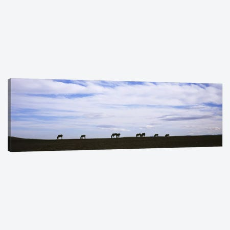 Silhouette of horses in a fieldMontana, USA Canvas Print #PIM5975} by Panoramic Images Canvas Art Print