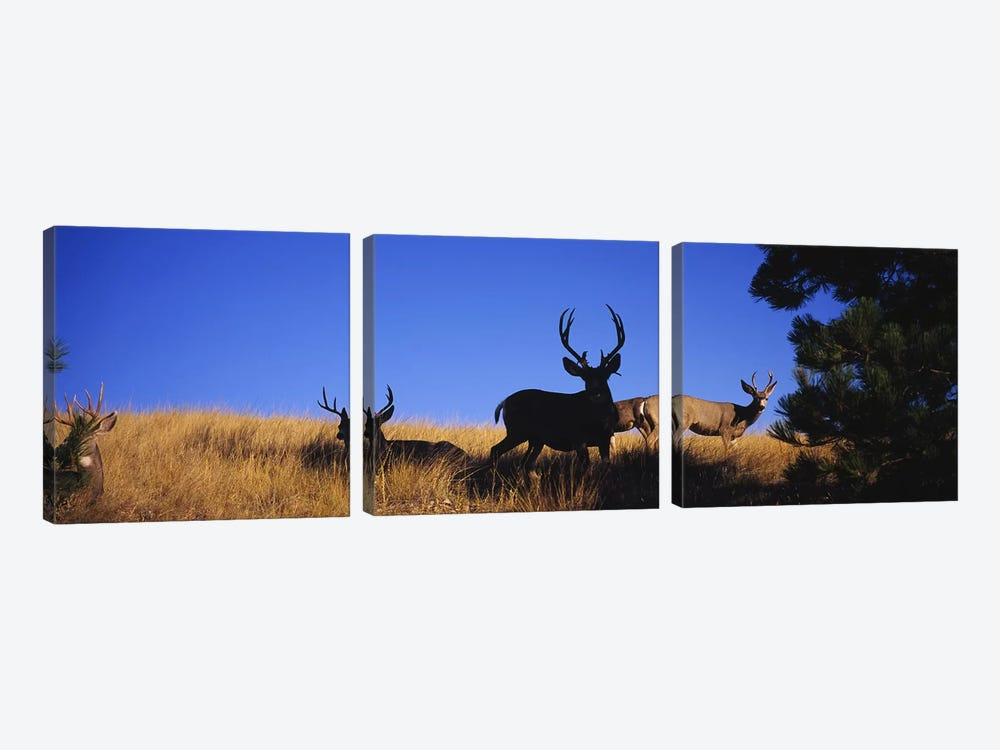 Five Mule deer in a fieldMontana, USA by Panoramic Images 3-piece Canvas Art